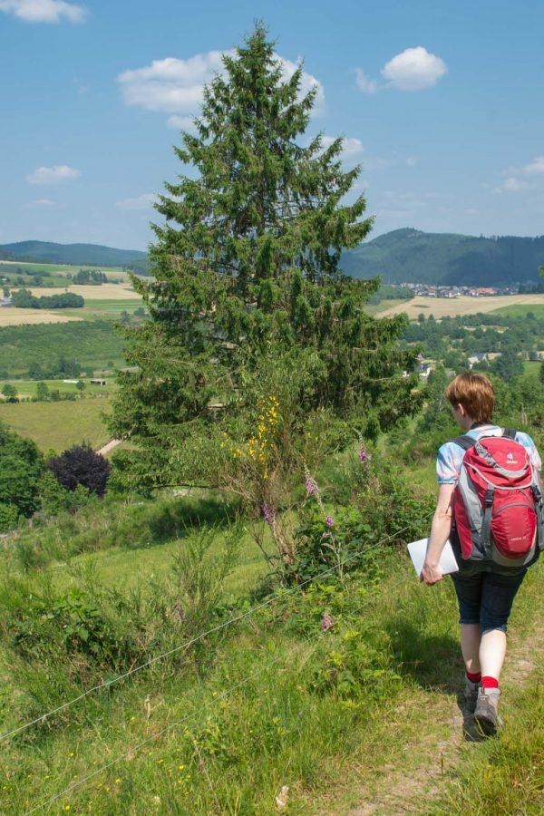 Wandern auf dem Rothaarsteig