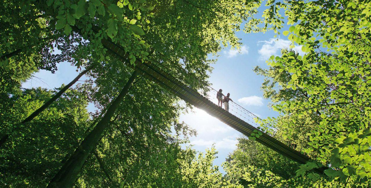 Hängebrücke am Rothaarsteig